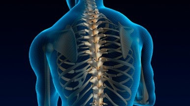 spine featured