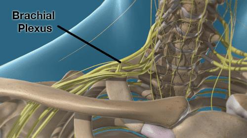 brachial plexus render