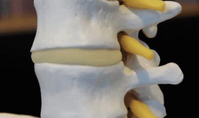 spine closeup